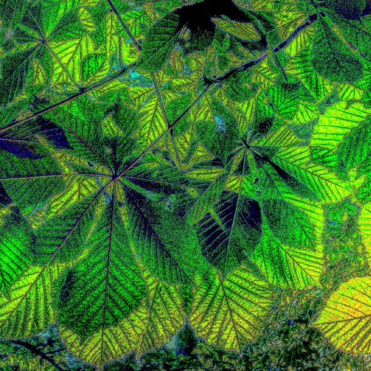 chestnut leaves
