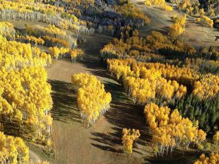 Aspen grove from above.