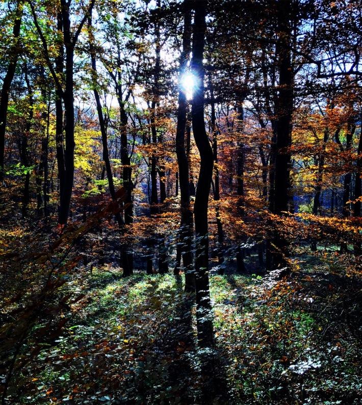 Deep forest light.