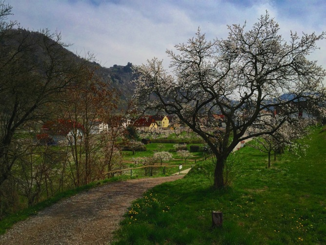 Springtime in the Wachau.