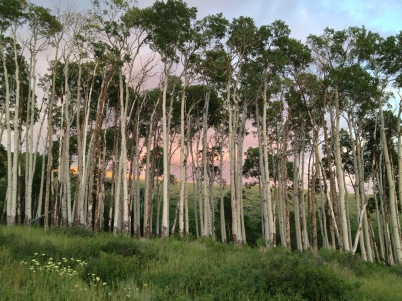 Twilight in the aspens.
