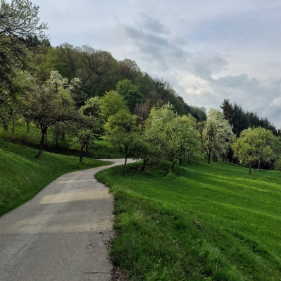 Trees abloom in Lower Austria.