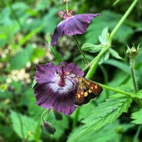 Riverside butterfly.