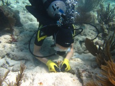 Planting coral to rebuild Flroida's coral reefs. Photo courtesy Stephanie Schopman.